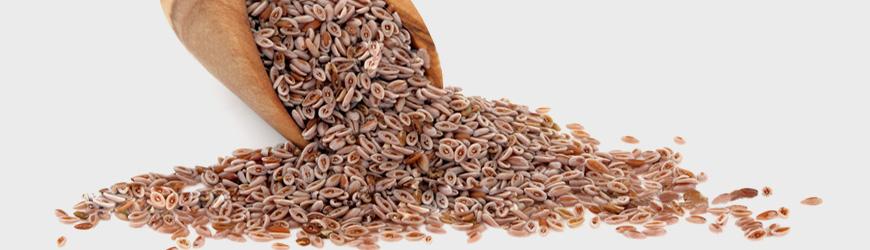 psyllium-seed